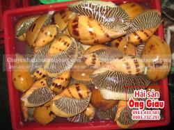 Giá mua bán ốc Giác biển hôm nay bao nhiêu tiền 1 kg tại TpHCM
