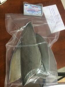 Công dụng – tác dụng chữa bệnh hữu ích của sụn vi cá mập