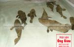 Cá mú cọp giá bao nhiêu 1 kg hiện nay – mua ở đâu tại TpHCM