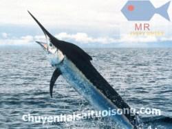 Mua Cá Kiếm TP. HCM – giá bán Cá Kiếm 1 kg?