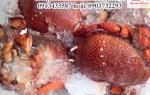 Bán cua huỳnh Đế tại Hà Nội – giá cua Huỳnh Đế bao nhiêu 1kg