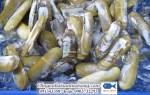 Ốc móng tay chúa – một trong các loại ốc ngon Sài Gòn