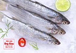 Giá cá đối và chế biến cá đối tươi ngon