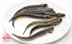 Lẩu cá kèo bổ dưỡng, giá cá kèo tươi