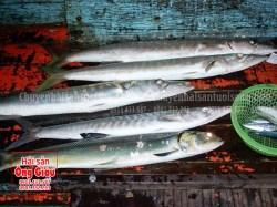 Giá cá nhồng tươi sống và các món ăn hấp dẫn