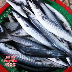 Bán cá rựa tươi ngon, giá tốt nhất thị trường