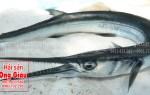 Giá bán cá nhái tươi sống hiện nay tại TP. Hồ Chí Minh bao nhiêu 1kg