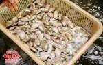 Giá bán ngao hoa tươi sống tại TP. Hồ Chí Minh bao nhiêu