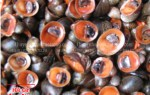 Nơi bán ốc dừa tươi sống hiện nay tại TP. Hồ Chí Minh bao nhiêu
