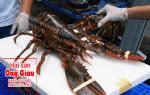 Bán tôm hùm Alaska tại Hà Nội online giá sỉ lẻ – hải sản Ông Giàu