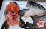 Đầu cá Hồi giá bao nhiêu tiền – có tác dụng gì – nấu làm món gì ngon