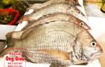 Cá Hanh biển bán ở đâu – giá bao nhiêu tiền 1kg – nấu gì ngon