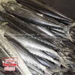 Cá Thu chấm mua ở đâu bán – giá bao nhiêu tiền tại TpHCM hiện nay