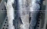 Thông tin về giá cá Thu Ngàng mua ở đâu bán – bao nhiêu tiền 1kg