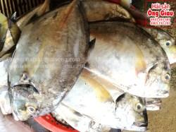 Cá Khế tươi sống ở đâu bán – Những món ăn ngon từ cá này