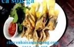 Giá bán cá Sơn Gà Nha Trang tươi giá sỉ lẻ tại TpHCM Sài Gòn