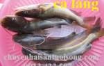 Giá bán cá lăng đuôi đỏ bao nhiêu tiền 1kg mua ở đâu tại TpHCM