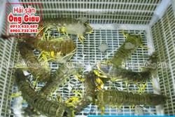 Tôm tích giá bán bao nhiêu 1kg hôm nay ở Sài Gòn-TpHCM