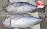Mua cá ngừ đại dương Phú Yên giá bao nhiêu tiền 1 kg ở TpHCM