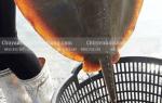 Cá Đuối đen-ó bao nhiêu tiền 1 kg ở TpHCM-Sài Gòn – làm món gì ngon