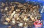 Ốc vòi voi – tu hài Việt Nam giá bao nhiêu tiền – mua ở đâu tại tphcm