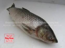 Cá trắm giòn là gì – bao nhiêu tiền 1kg – mua ở đâu tại TpHCM