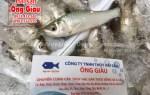 Nơi bán cá linh tươi sống thơm ngon ở THPCM