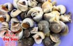 Giá bán con ốc mỡ tươi sống tại TP. Hồ Chí Minh hiện nay bao nhiêu