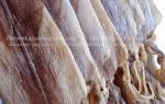 Mực khô Hải Phòng mua ở đâu bán tại TpHCM – giá bao nhiêu tiền