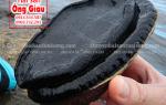 Bào ngư đen New Zealand giá bao nhiêu – mua ở đâu tại tphcm