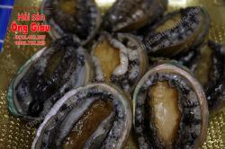 Bào ngư Hàn Quốc sống nhập khẩu giá bao nhiêu tiền 1 kg