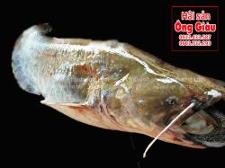 Cá Nheo bao nhiêu tiền 1 kg – sống ở đâu – cách chế biến ngon