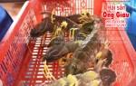 Tôm tít sống giá bao nhiêu tiền 1 kg – bán ở đâu tại tphcm