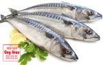 Cá Thu Ảo giá mua bao nhiêu tiền 1kg – ăn có ngon không