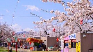 【2017/5/3~14】2017もりまち桜まつり(森町)
