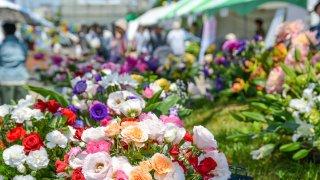 【2017/6/10・11】はこだて花と緑のフェスティバル2017