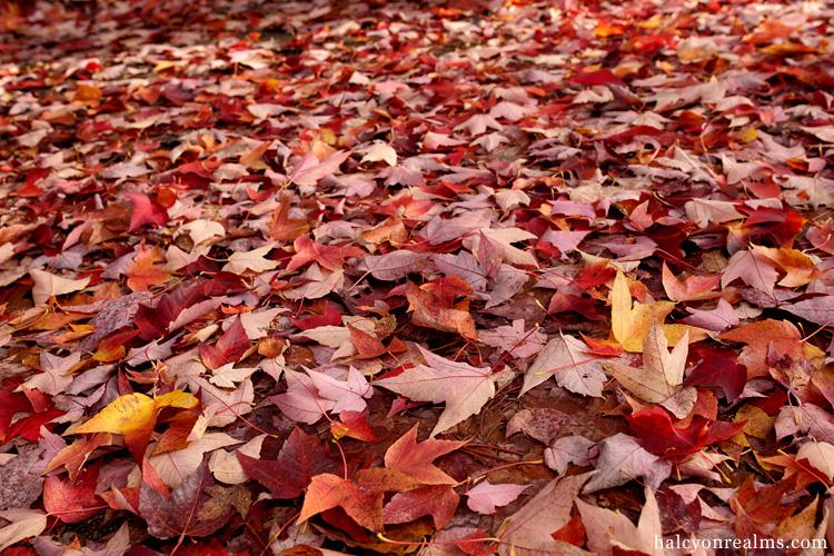 Autumn Colors, Vancouver B.C, 2016