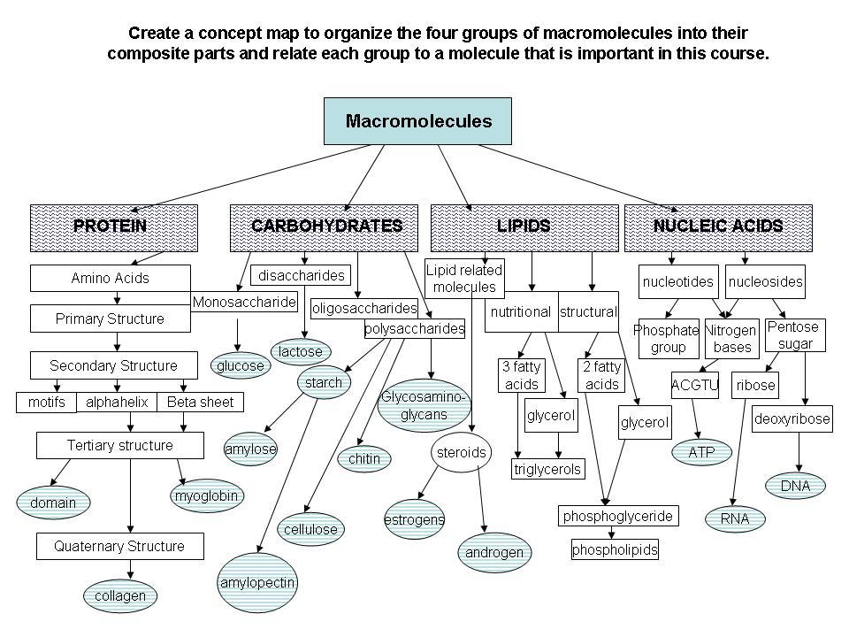 The monomer of Carbohydrate Macromolecules Pinterest - resume print out
