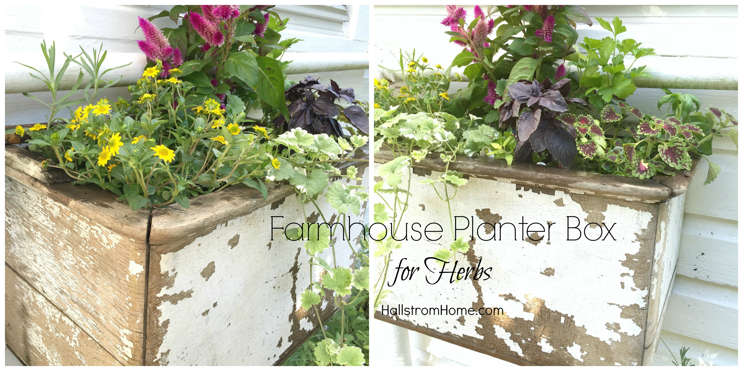 Planter For Herbs Farmhouse Planter Box For Herbs Hallstrom Home