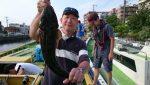 8月11日(木)マゴチ乗合 爆釣!午前便 午後便共に大漁早がり