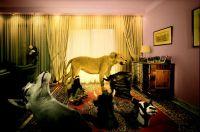 Fotografie | meerschweinchenreport
