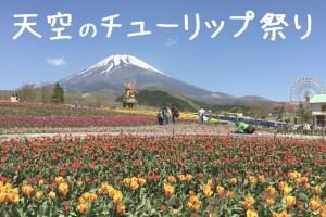 tulip-fes1