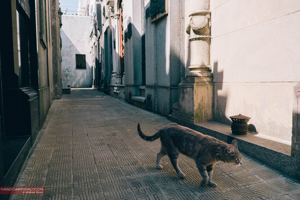 A lone cat wanders the narrow lanes of Recoleta Cemetary, buenos aires, argentina