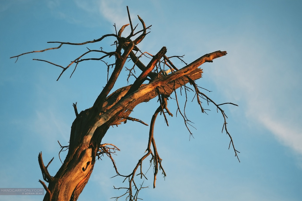 tree branch in sunset okavango delta