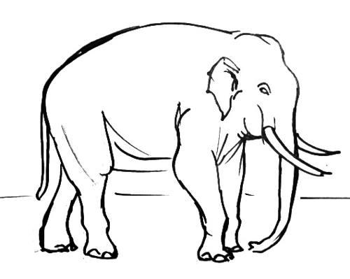 Индийский слон рисунок