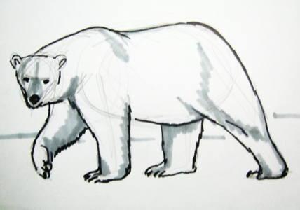 Белый медведь рисунокКак нарисовать белого полярного медведя.