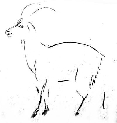 Поэтапный рисунок козла