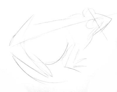 Лягушка- эскиз карандашом