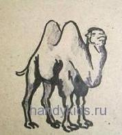 Верблюд рисунок