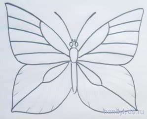 Рапределяем жилки по крылу бабочки